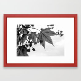 Spring Leaves - Black & White Framed Art Print