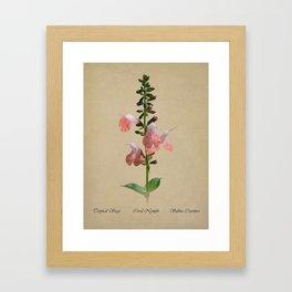 Tropical Sage Botanical Framed Art Print