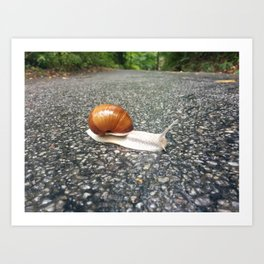 Beautiful Snail on Forest Art Print