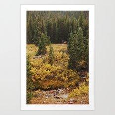 Rocky Mountain Creek Elk Art Print