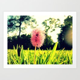 Pink and Fluffy Art Print