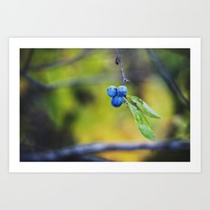 autumn fruit. Art Print