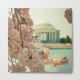 DC Cherry Blossoms Metal Print