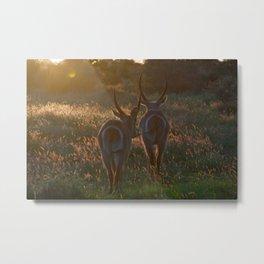 dusk, kruger national park Metal Print