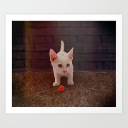 Alley Kitten Art Print
