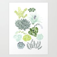 succulents Art Prints featuring Succulents  by Rae Ritchie