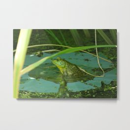 Frog Photography Print Metal Print