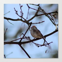 sparrow on branch Canvas Print
