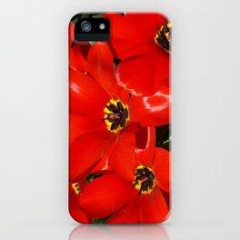 Seductive Red iPhone Case