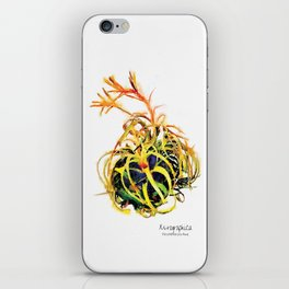 Tillandsia Xerographica Air Plant Watercolor iPhone Skin