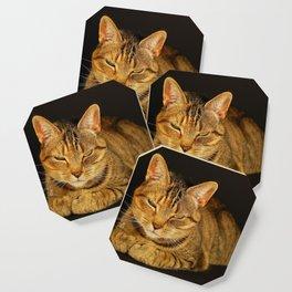 Cat 1 Coaster