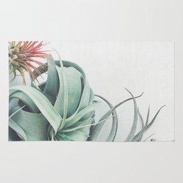 Air Plant Collection Rug