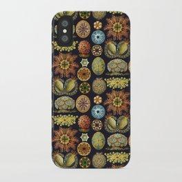 Ernst Haeckel Sea Squirts Ascidiae Black Background iPhone Case