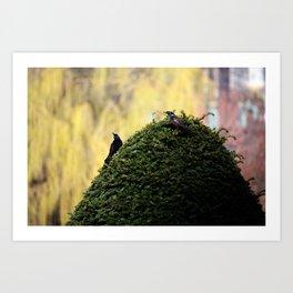 Birds in The Bush Art Print