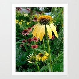 Coneflower Garden Art Print