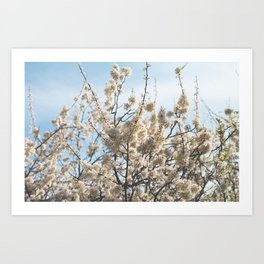 High Budget Blossoms Art Print