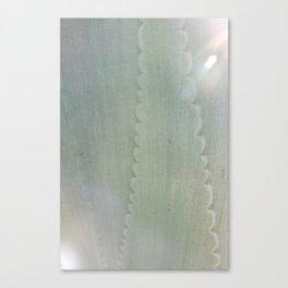 Agave Aglow Canvas Print