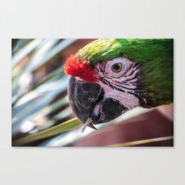 Colorful Guacamaya Canvas Print