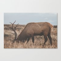 elk Canvas Prints featuring Elk by Luke Gram