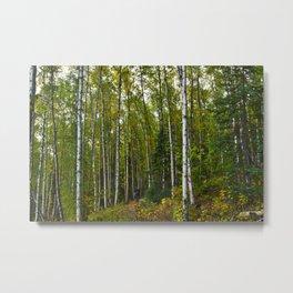 Birch Forest Hiking Metal Print