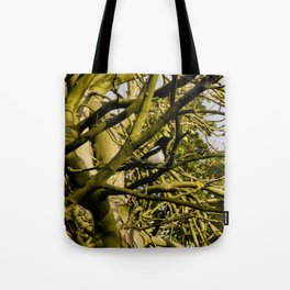 Magpie resting in a tree Tote Bag