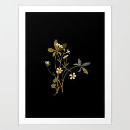 Saxifragia Granulata and Potentilla Alba Cinquefoil Paper Flower Collage Vintage Botanical Floral Art Print