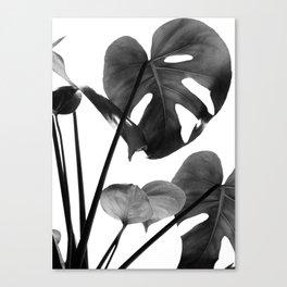 Monstera Vibes #2 #minimal #decor #art #society6 Canvas Print