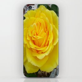 Head On View Of A Yellow Rose With Garden Background iPhone Skin