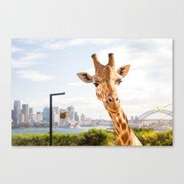 Giraffe with a View Canvas Print