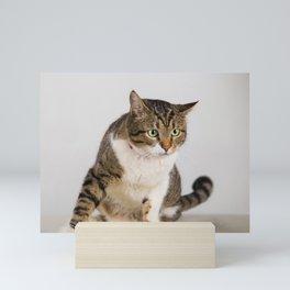 curious cat with big eyes Mini Art Print