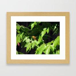 Buzzy Boy Framed Art Print
