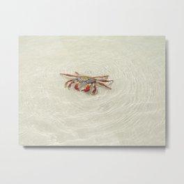 crab in the water Metal Print