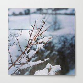 Early spring leaves covered by snow Metal Print