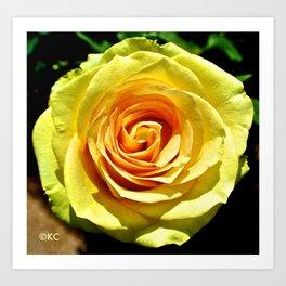 Canary Rose Art Print