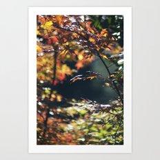 Autumn Window Art Print