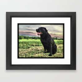 Labrador at Dusk Framed Art Print