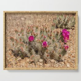 Desert Cacti in Bloom - 2 Serving Tray