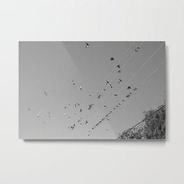 Birds & Wires Metal Print