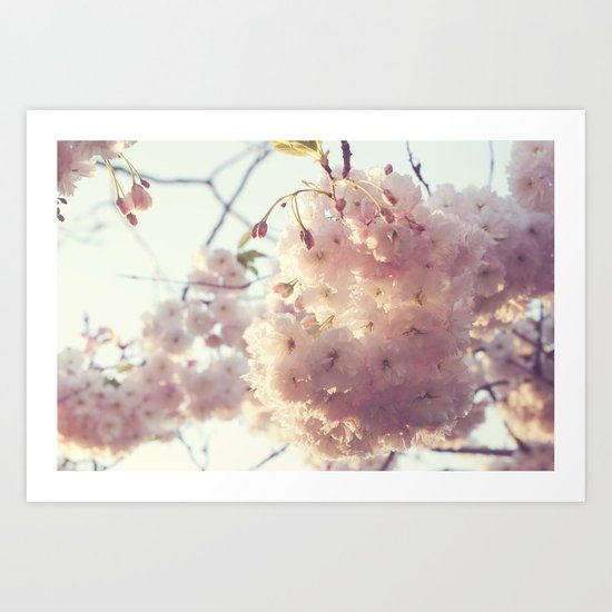 sunlit cherryflowers Art Print