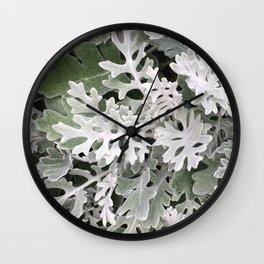 "Jacobaea maritima ""Dusty Miller"" Wall Clock"