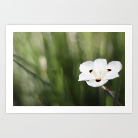 An Flower Art Print
