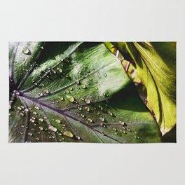 Sunlight After Rain -The Garden Series Rug