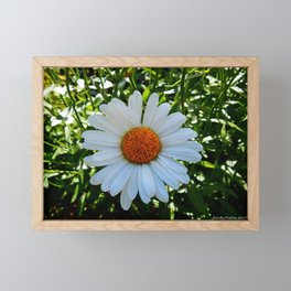 Single White Daisy Framed Mini Art Print