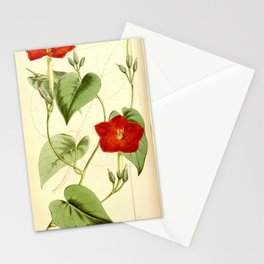 Ipomoea nationis (Quamoclit nationis) Bot. Mag. 90. 5432. 1864. Stationery Cards