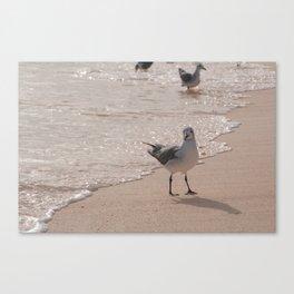 seagul Canvas Print
