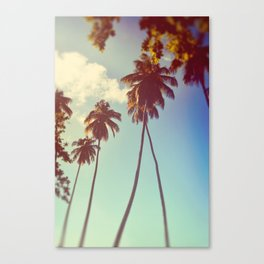 Vintage Palms Canvas Print