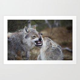 Wolf Love  Art Print
