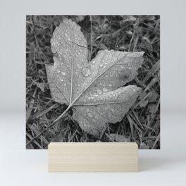 Water drops on leaf maple, black and white photo Mini Art Print