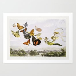 The Fairy Queen Takes an Airy Drive in a Light Carriage, a Twelve–in–hand, drawn by Thoroughbred Butterflies (1870) by Richard Doyle. Art Print