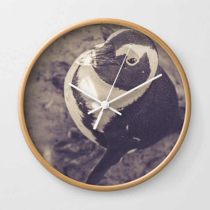 Adorable African Penguin Series 3 of 4 Wall Clock